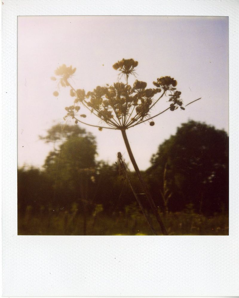 Polaroid3 Aug 09064