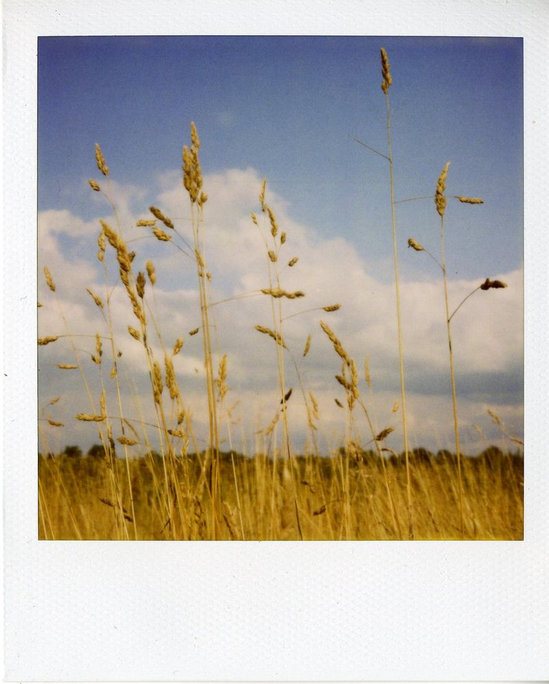Polaroid Aug 09062