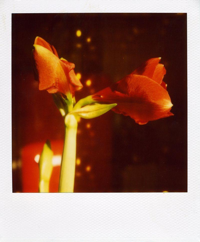 Polaroid_22.02.10
