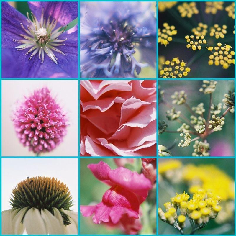 Flower mosiac