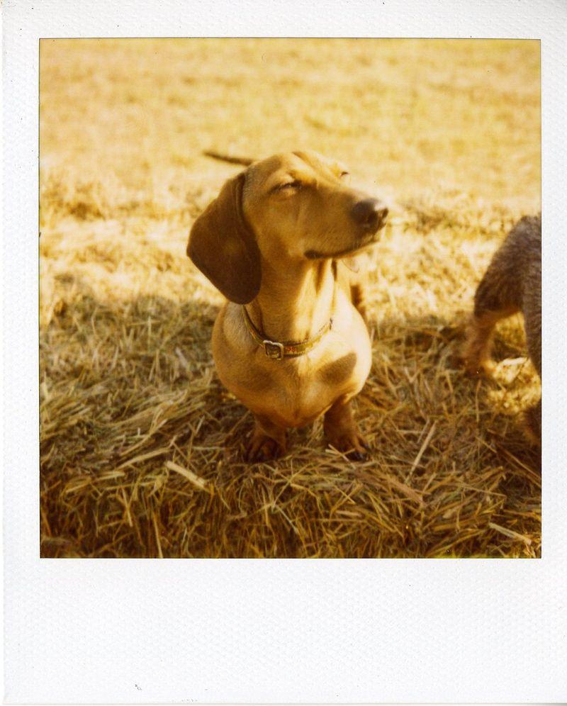 Polaroid8 Aug 09069